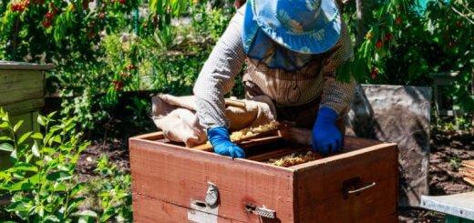 start a beekeeping business
